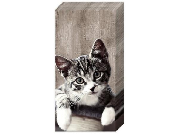 Taschentuch Ihr Kasimir Katze 10Stk.
