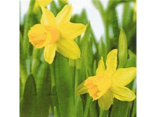 Servietten Ihr Lunch Daffodil, grün, mit Osterglocken