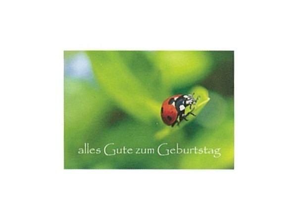Geburtstagskarte Art Bula 12,2x17,5cm, mit einem Marienkäfer