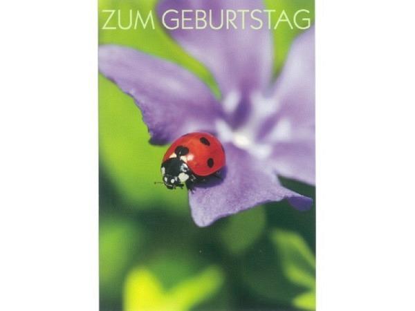 Geburtstagskarte Art Bula 12,2x17,5cm Marienkäfer auf violet