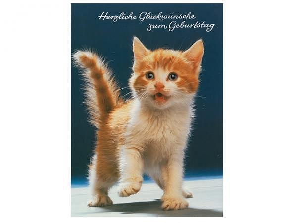 Geburtstagskarte ABC Kätzchen 11,5x17cm, dunkelblau