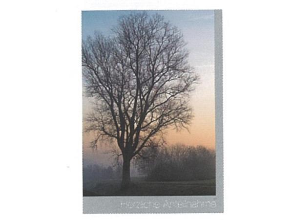 Trauerkarte Art Bula 12,2x17,5cm einsamer Baum
