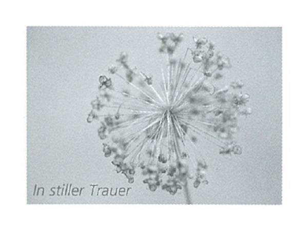 Trauerkarte Art Bula 12,2x17,5cm schwarzweisse Pusteblume