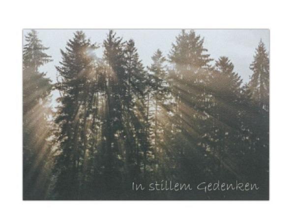 Trauerkarte Art Bula 12,2x17,5 Tannenwald mit Sonnenstrahlen