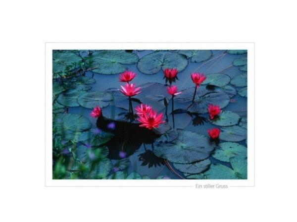 Trauerkarte Satzschnur Fotografie Rose Seerosen Doppelkarte A5 14,8x21cm quer hochwertiges Papier Su
