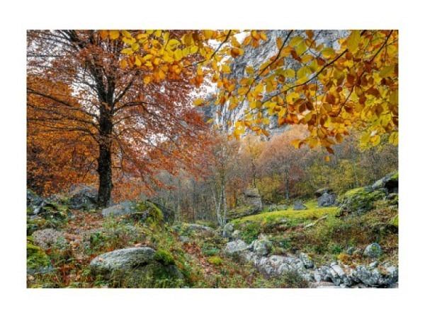 Karte Art Bula 12,2x17,5cm stilles grünes Wasser durch Felsen