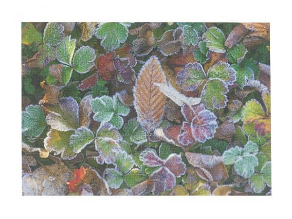 Karte Art Bula 12,2x17,5cm Pflanzen im Frost
