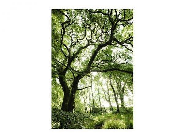 Karte Cart Fotografie Landschaft Baum im Wald 12x17cm