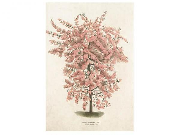 Doppelkarte Sköna Ting Vintage 17x12,5cm, chamois Doppelkarte bedruckt mit rosa Baum