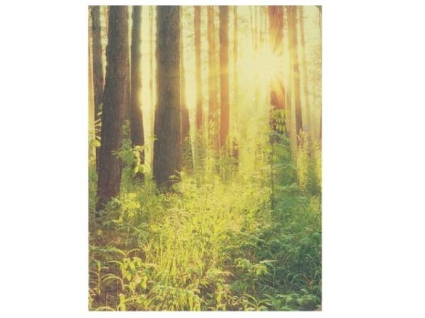 Karte Hartung Feel Good Waldlichtung 12x17cm