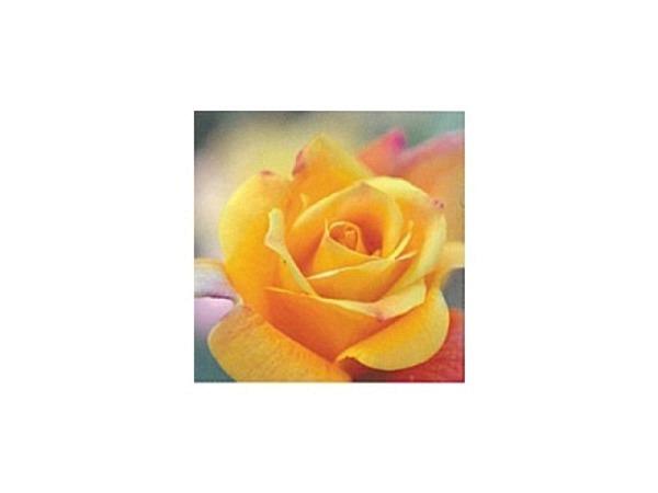 Karte Art Bula 12,2x12,2cm gelbe Rosenblüte