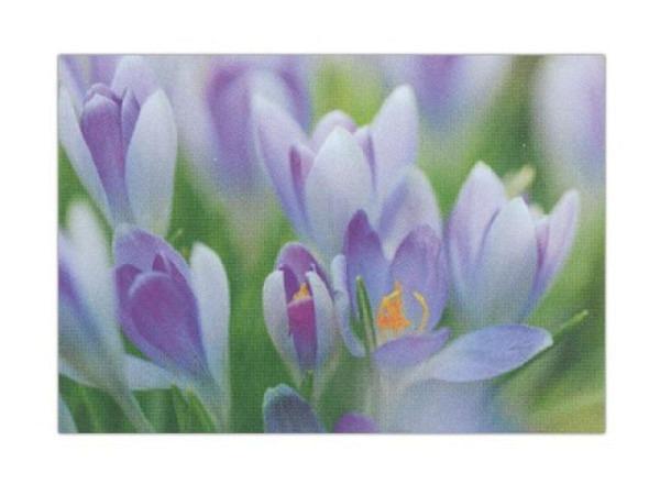 Karte Art Bula 12,2x17,5cm Krokusse weiss-lila, Doppelkarte