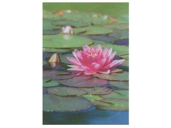 Karte Art Bula 12,2x17,5cm Seerose pink