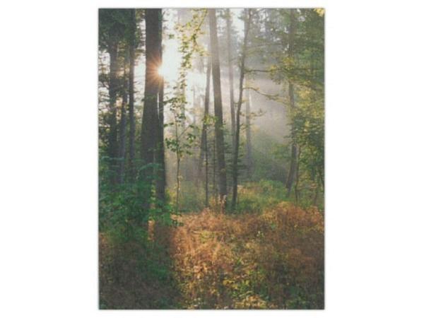 Karte Art Bula 14,8x21cm Wald im Sonnenschein, A5