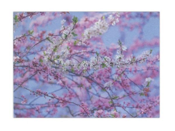 Karte Art Bula 14,8x21cm Kirschblüten-Baum rosa, A5