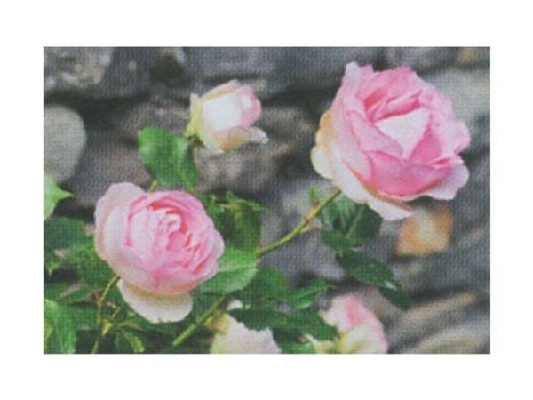 Karte Art Bula mini 10,5x7,4cm wilde Rosen pink