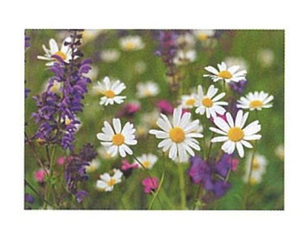 Karte Art Bula 12,2x17,5cm Blumenwiese mit Margareten