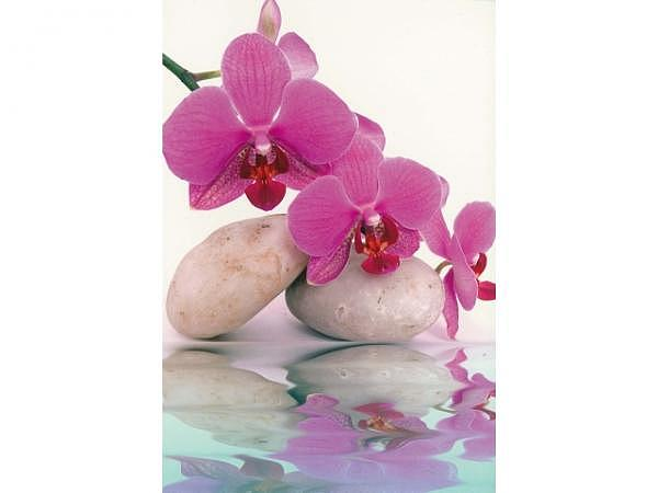 Karte Borer Orchideen 6er Böxli 11,5x17cm
