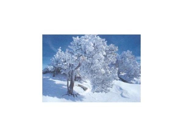 Kartenbox Art Bula 5er Set, Tannenbäume bedeckt mit Schnee