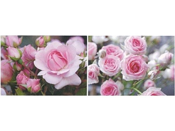 Kartenbox Art Bula 5er Set 12,2x17,5cm pinke Rosenmotive