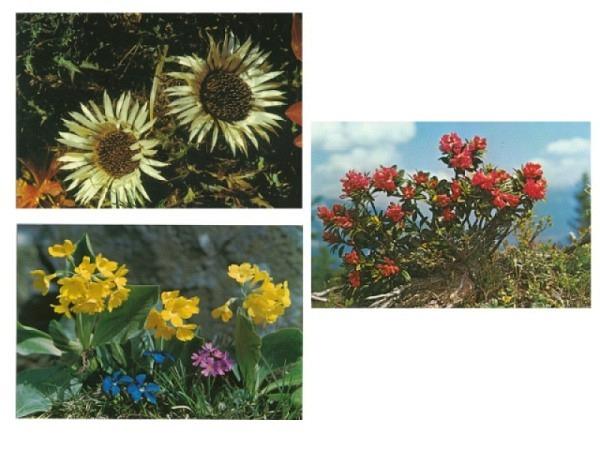 Kartenbox Alpenblumen 6Stk. A6x2quer
