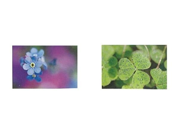 Kartenbox Art Bula 5er Set versch. Blumen und Blättermotive