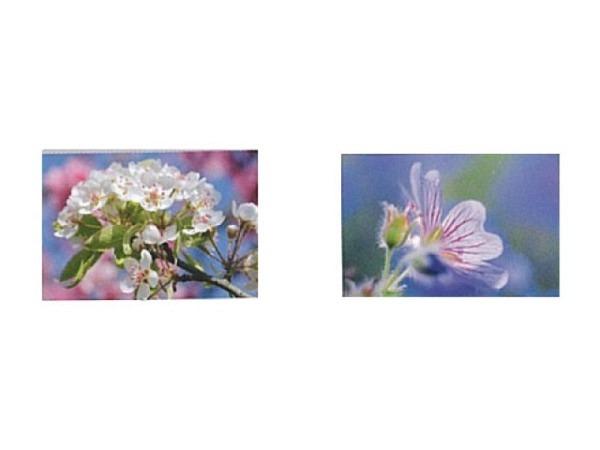 Kartenbox Art Bula 5er Set 7,4x10,5cm, versch. Blumenmotive