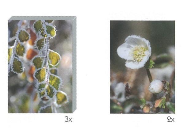 Kartenbox Art Bula 5er Set Blätter und Blüte mit Frost