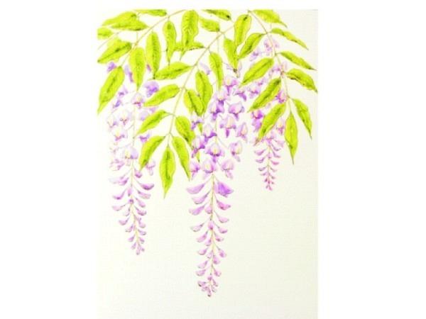 Karte Paula Skene 8er Set Wisteria Blüte in violett