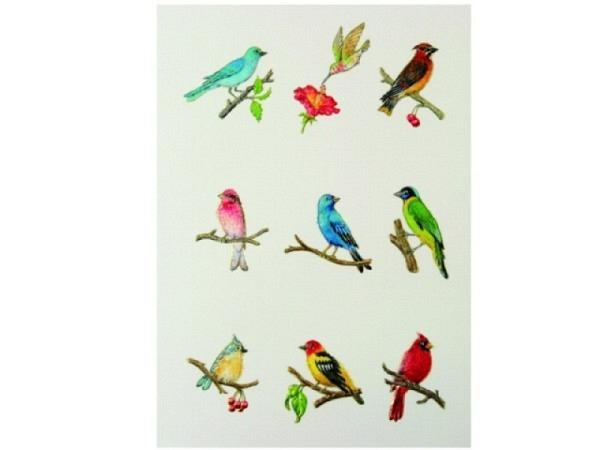 Karte Paula Skene 8er Set Vögel, Bunte Vögel sitzend