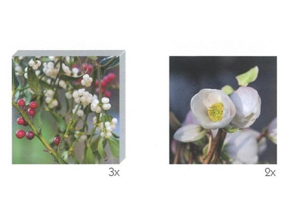 Kartenbox Art Bula  Set 12,2x12,2cm Beeren und weisse Blüte