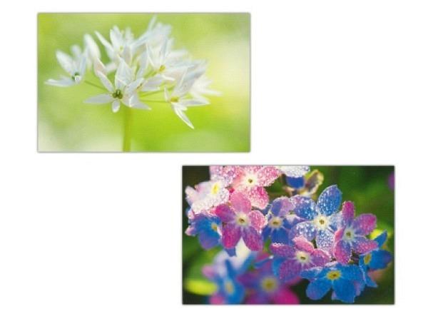 Kartenbox Art Bula 5er Set 7,4x10,5 Bärlauch und Hortensien