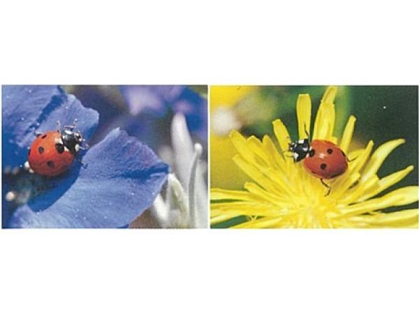 Kartenbox Art Bula 5er Set, Blume mit Marienkäfer