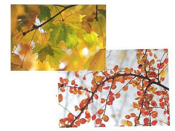 Kartenbox Art Bula 5er Set 7,4x10,5cm Ahornblätter im Herbst