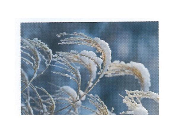 Karte Art Bula mini 10,5x7,4cm Korn schneebedeckt
