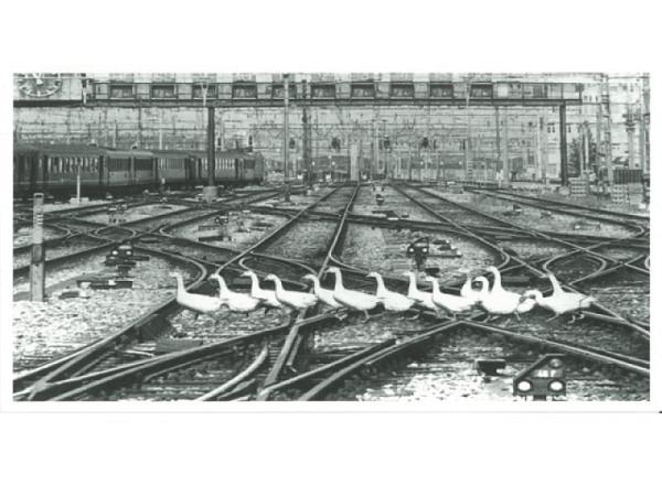 Postkarte Manfred Ziegele Gänse auf den Gleisen