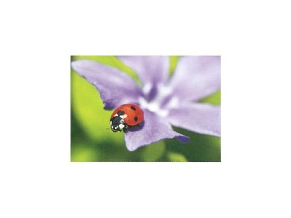 Postkarte Art Bula 10,5x14,8cm Marienkäfer violette Blume