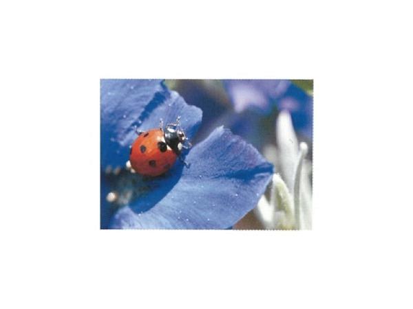 Postkarte Art Bula 10,5x14,8cm Marienkäfer auf blauer Blüte