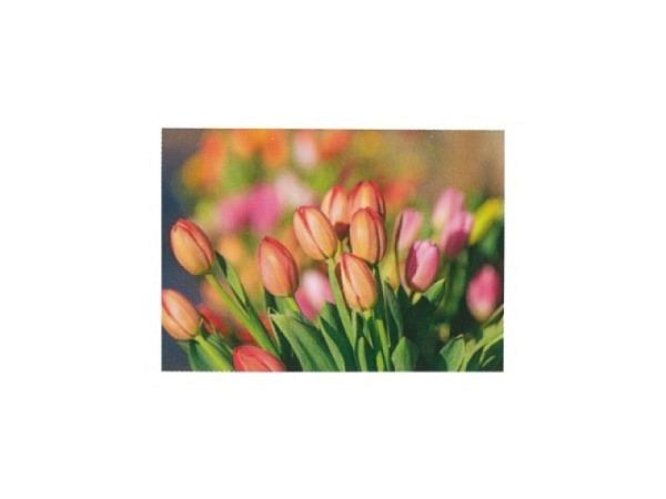 Postkarte Art Bula 10,5x14,8cm Tulpenknospen in rot und rosa