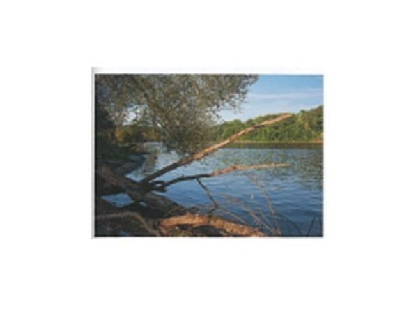 Postkarte Art Bula 10,5x14,8cm Äste am Ufer des Flusses
