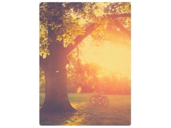 Postkarte Hartung Feel Good Fahrräder auf einer Waldlichtung 12x17cm