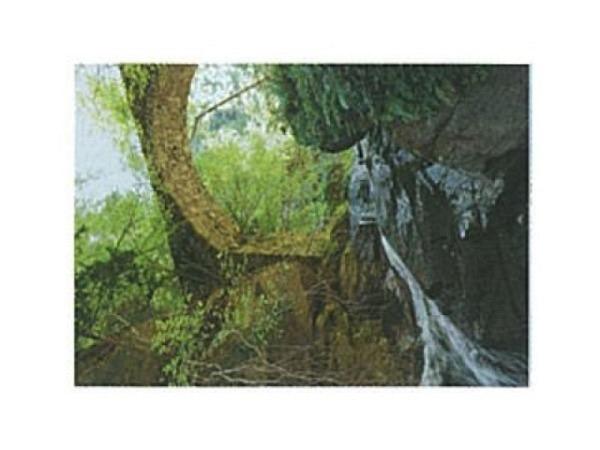 Postkarte Art Bula 10,5x14,8cm Waldstuck, grosses Loch Baum