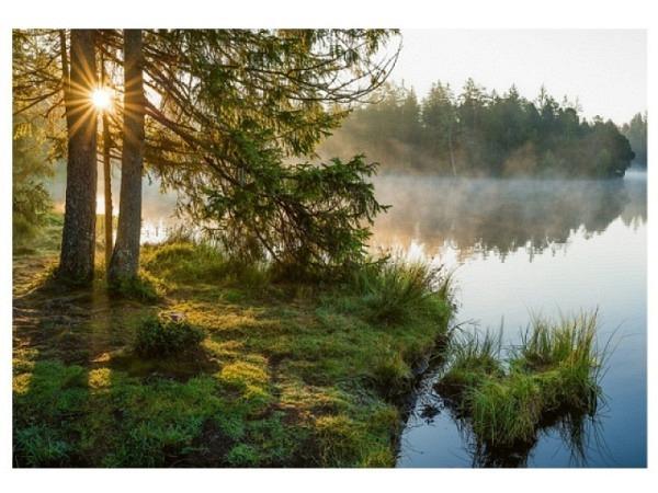 Postkarte Art Bula 10,5x14,8cm Wald mit Sonnenblick