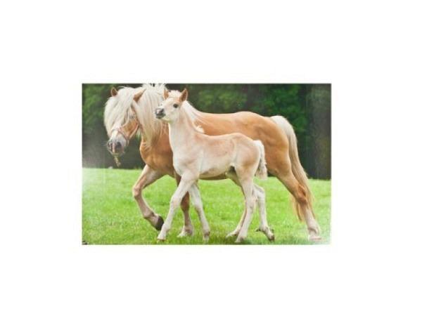 Schreibunterlage Kolma Poster 58x38cm Pferd mit Fohlen