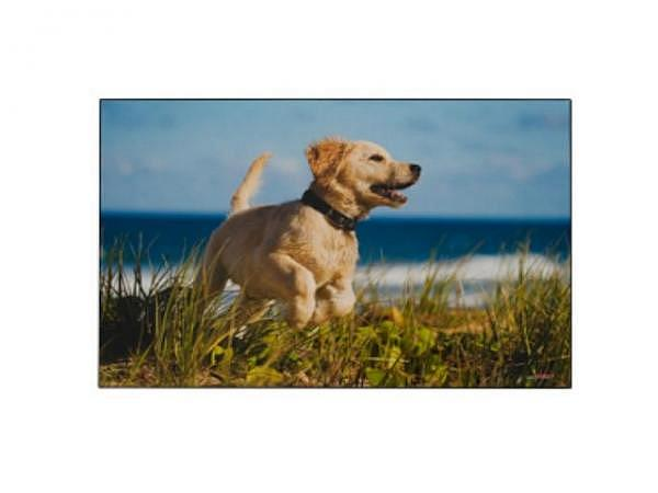 Schreibunterlage Kolma Poster 44x34cm Hund