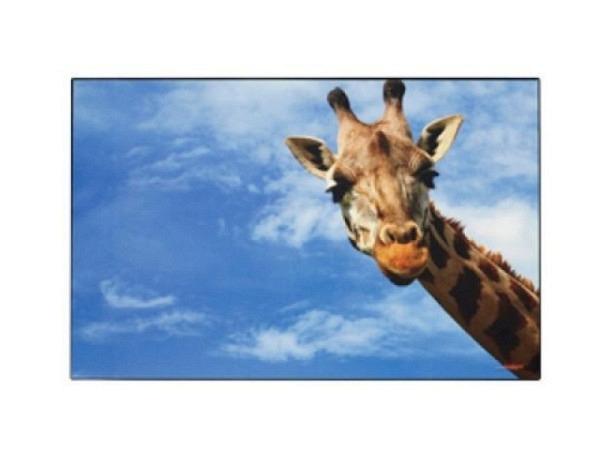 Schreibunterlage Kolma Poster 44x35cm Giraffe