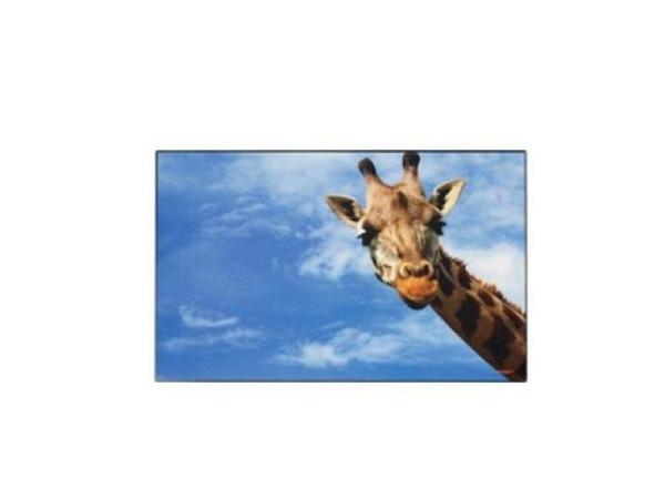 Schreibunterlage Kolma Poster 58x38cm Giraffe