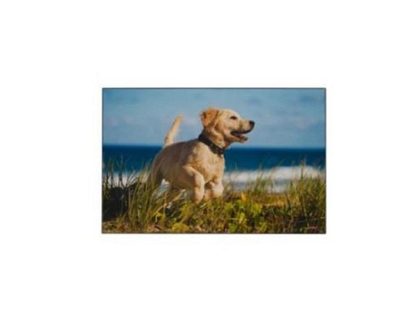 Schreibunterlage Kolma Poster 58x38cm Hund