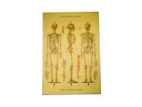 Geschenkpapier Cavallini Skelett des menschlichen Körpers