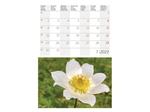 Kalender Alpen- und Gartenblumen 14,8x22cm